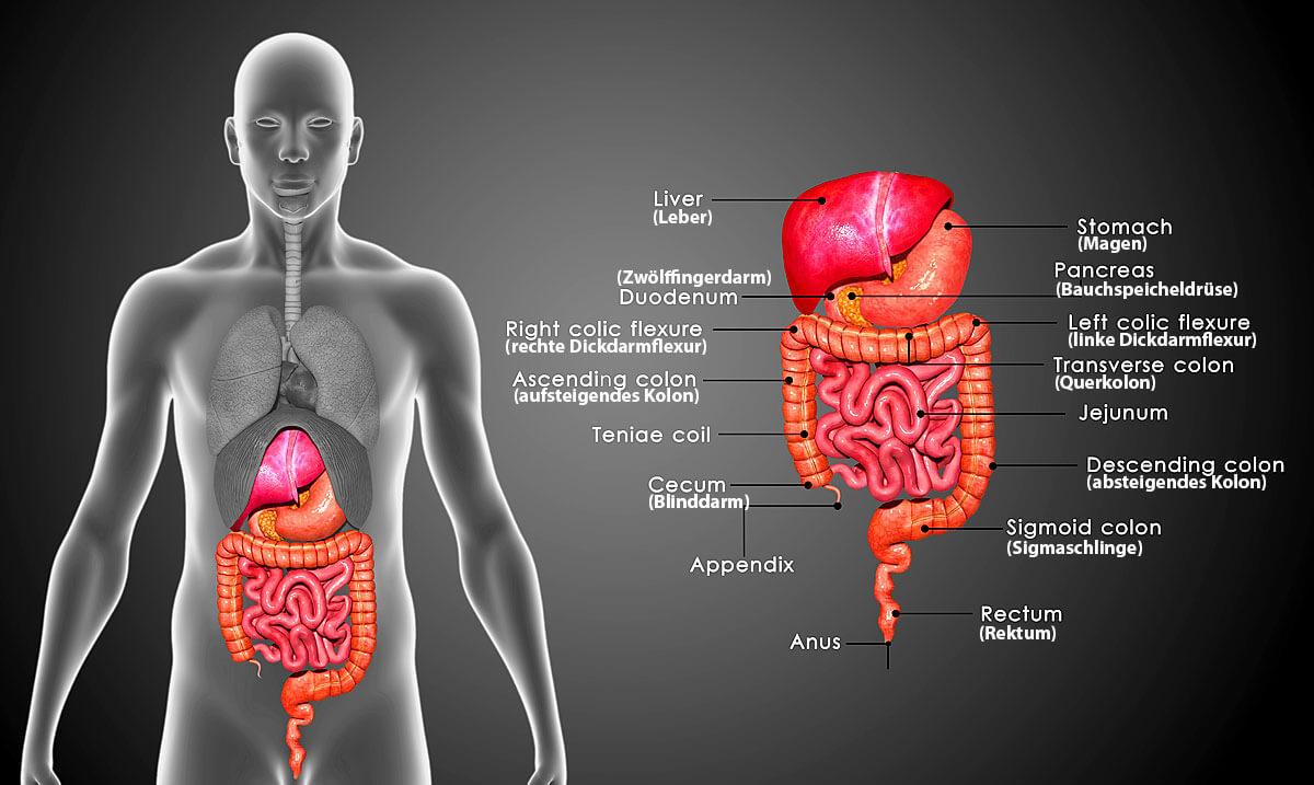 Bauchspeicheldrüsenkrebs Symptome Ursachen Und Verlauf