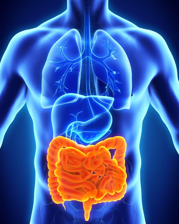 Lage des Darms im menschlichen Körper