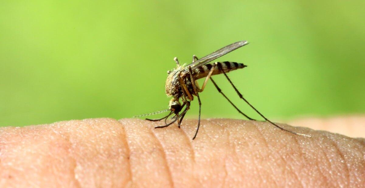 malaria symptome die typischen anzeichen des sumpffiebers. Black Bedroom Furniture Sets. Home Design Ideas