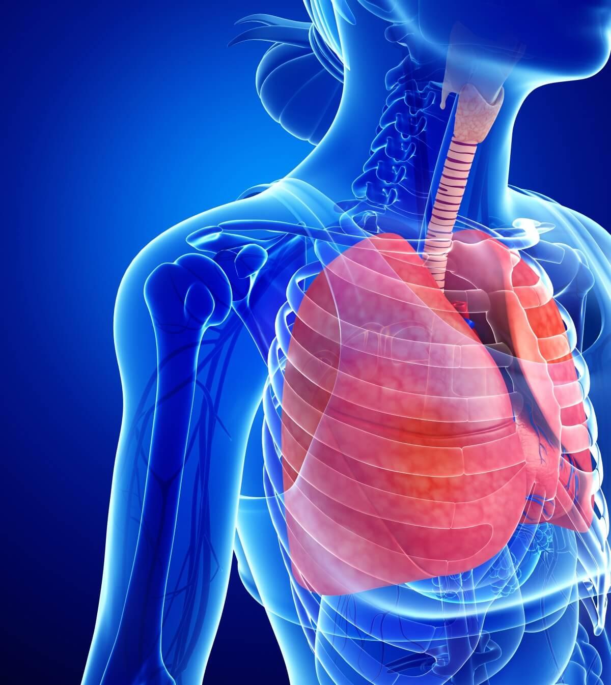 Rippenfellentzündung - Die typischen Symptome erkennen